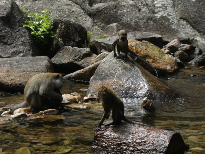 The waterfall is a haven for humans and monkeys alike
