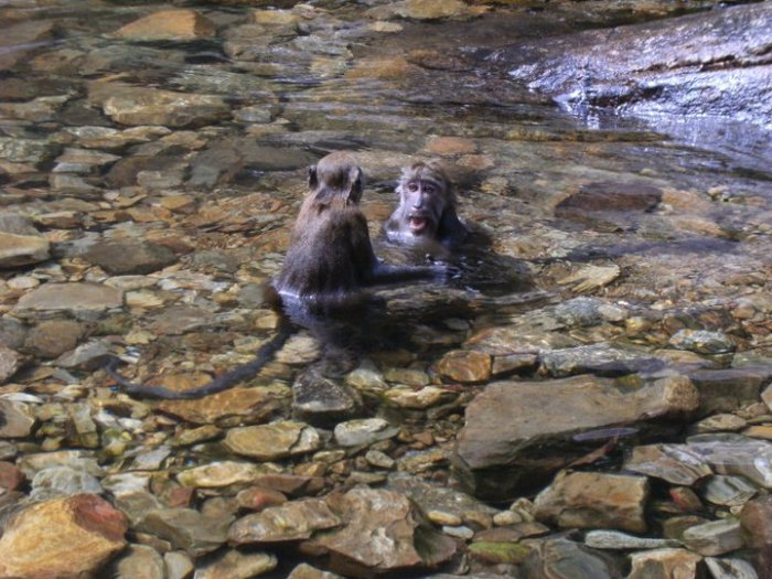 Bath time for everyone…the monkeys have a chat