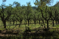 Olive groves line the cycle tracks
