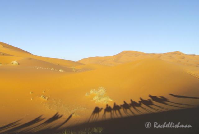 Morning camel shadows on the Sahara Desert