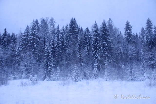 One of the many snowscapes from the window of a Trans-Siberian cabin