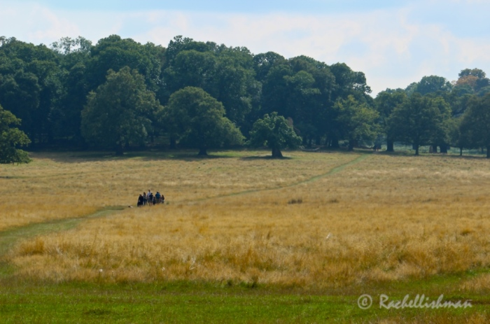A family head into the woodland of Richmond Park