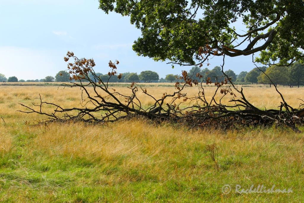 Early autumn takes a grip on a path through Richmond Park