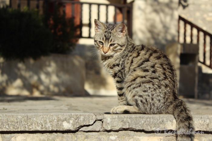 A small tabby cat catches the sun on the steps of St Mary's Church
