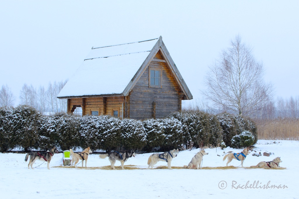 Riga's hostels offer trips to the surrounding countryside to go husky sledding (snow dependent!) It makes an adrenaline-filled break from the city!