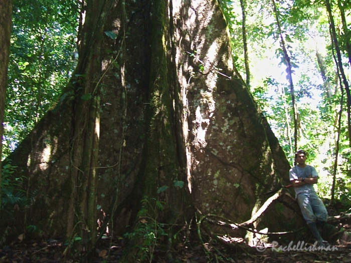 Wingo gives me some perspective in the primary rainforest.
