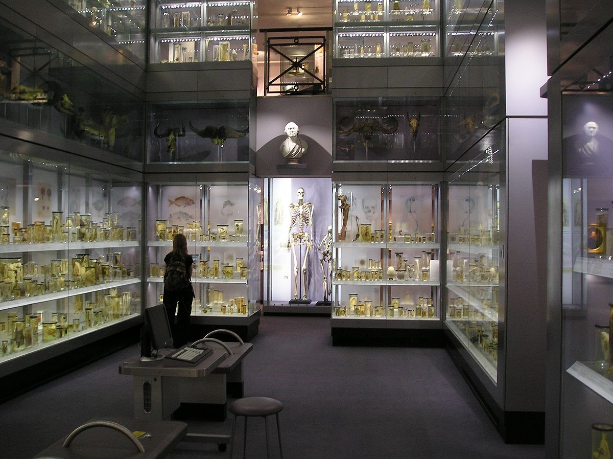 """Hunterian Collection"" by StoneColdCrazy (Wikipedia)"