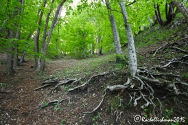 The woodland surrounding the lakes is often overlooked, but just as beautiful