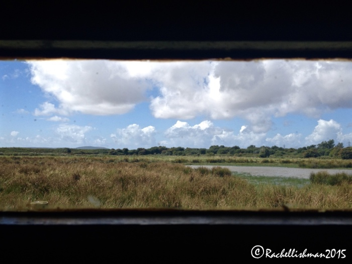 Sit quietly in the Wetlands Centre's hides to spot over 50,000 species of bird.