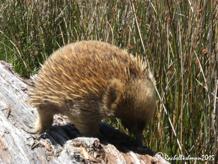 Some of Australia's most reclusive wildlife pops out to say hello in St Clair National Park!
