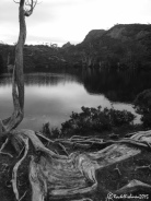 Ancient roots of ancient trees around Dove Lake give an eerie feel to the end of a silent hike...