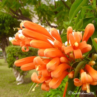 The type of flowers that grow in the Canaries hint at how close the equator is from these islands