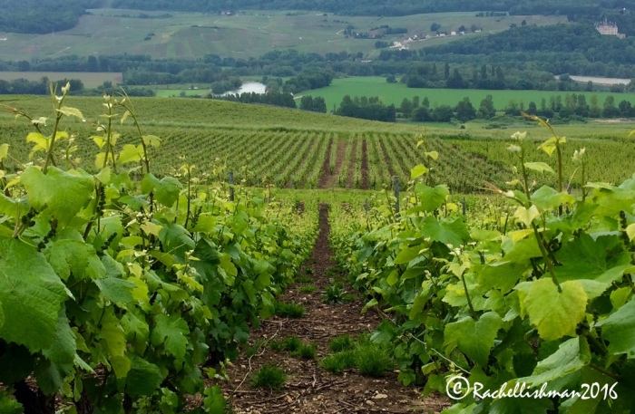 The beautiful grape-growing region of Champagne-Ardenne