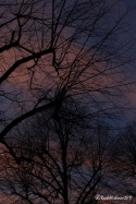 Almost dark: the wintry pinks and purples linger before the light goes completely