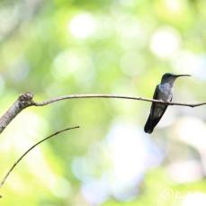 Hummingbirds: everywhere!