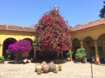 Na Bolom's central courtyard
