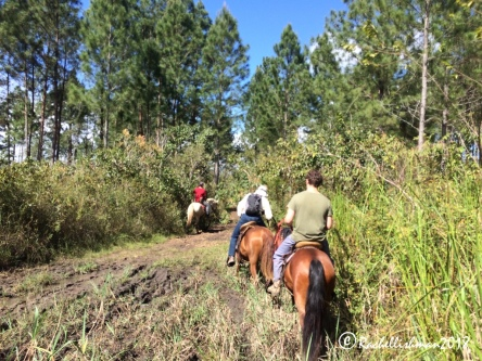 Riding through the farm's pine forests can get muddy!