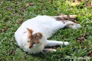 Ixa, the finca's cat lazed around the grounds on a daily basis