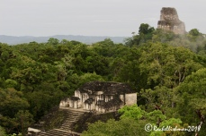 The Maya complex of Tikal, once a huge city, is now hidden slightly under the canopy